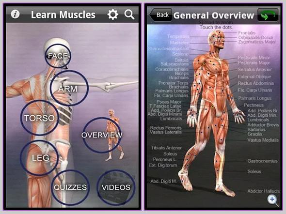learn-muscles1