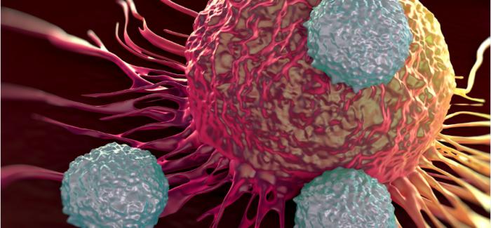Bağışıklık Sistemindeki Hücreler Nasıl Yeniden Programlanabilir?
