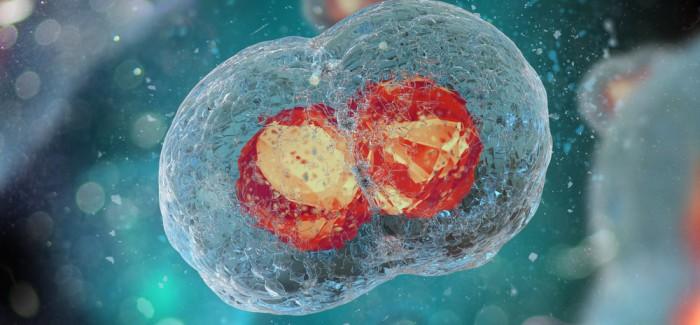İnsan Embriyosunun İlk Kez Düzenlenmesiyle Genetik Bir Kalp Hastalığı Tedavi Edildi
