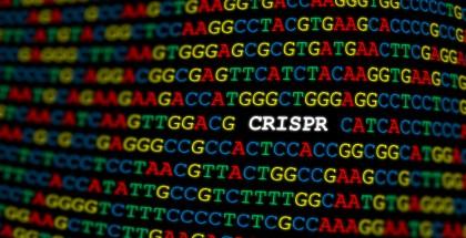 CRISPR gen düzenleme