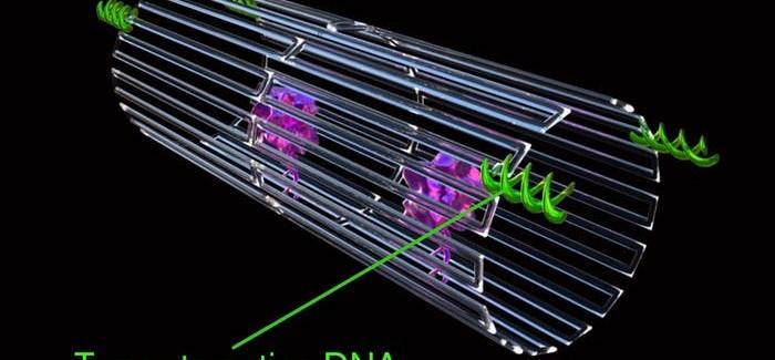 İlaç Taşıyan DNA Nanorobotlar Kanser Tedavisinde Kullanılacak