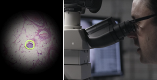 google-mikroskop