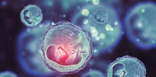 Yapay Embriyolar, Hamilelikteki Riskleri Ortadan Kaldırabilir