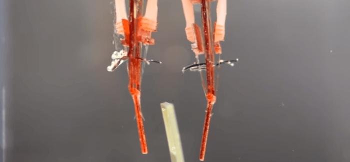 Canlı Kas Hücrelerine Sahip Robot Parmak Üretildi